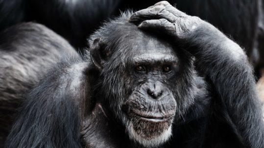 #MonkeyFirst - Priorisierung - Priorität - Google X