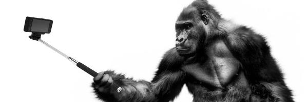 Bälle, Gorillas, Video und blinde Flecken