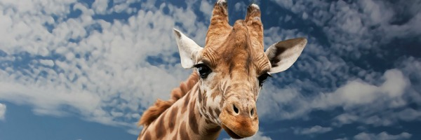 Giraffenbrot - Märkte sind Gespräche