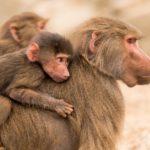 Monkey-Falle - Selbstverantwortung - Führung - Führungskräfte